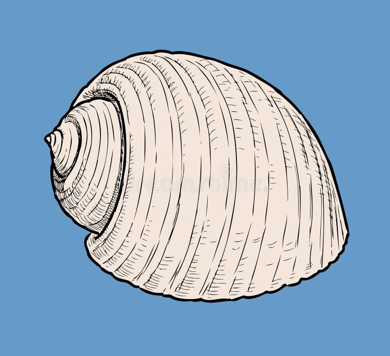 Dibujo de la mano de una concha de berberecho libre illustration