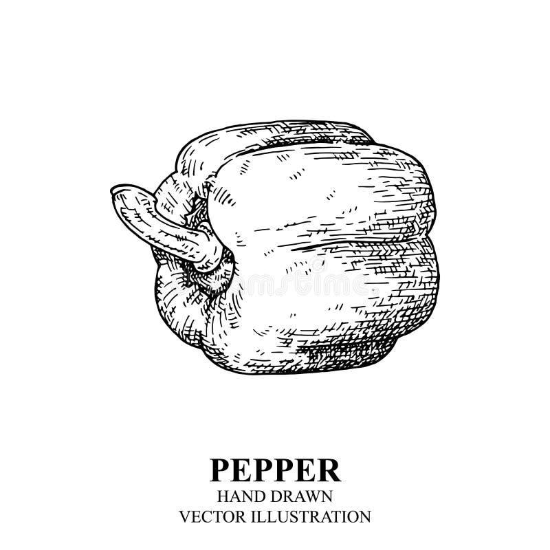 Dibujo de la pimienta En el fondo blanco libre illustration