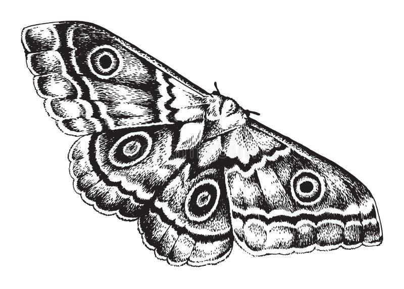 Dibujo de la pluma y de la tinta de una polilla stock de ilustración