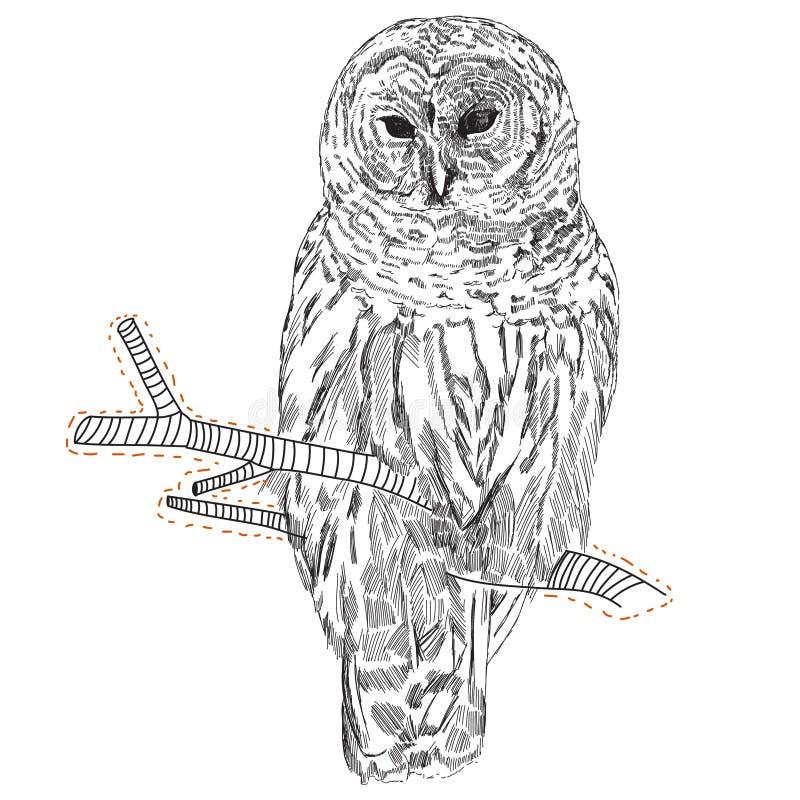 Dibujo de un búho en una rama imagen de archivo
