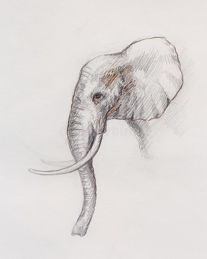 Dibujo de un elefante, dibujo del perfil con las líneas y sombras libre illustration