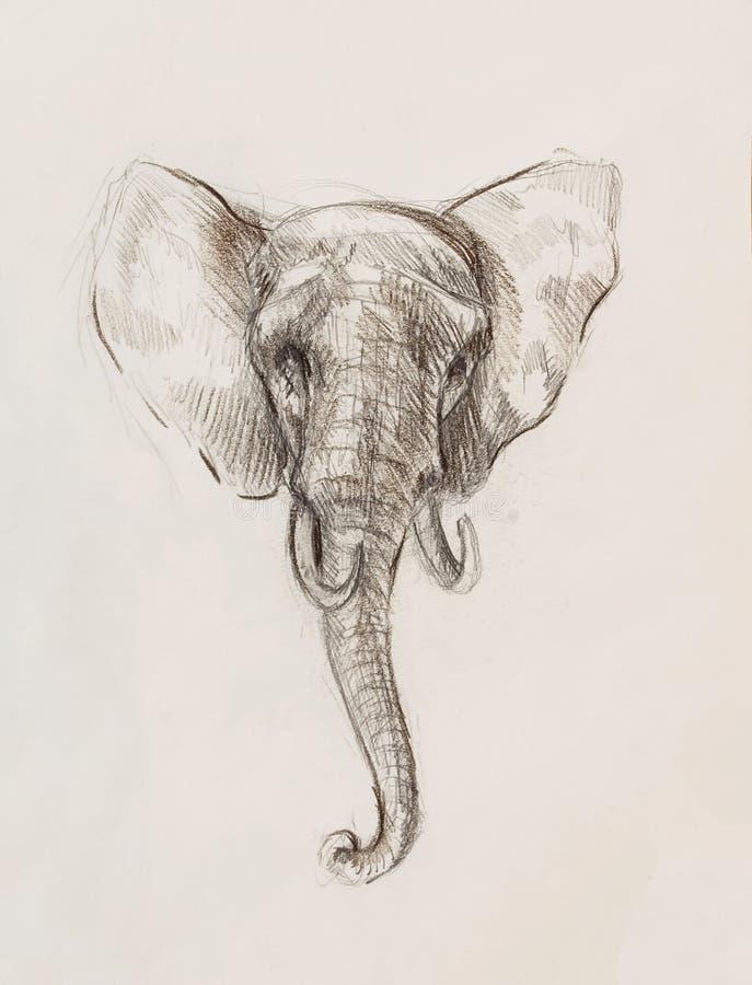 Dibujo de un elefante, dibujando con las líneas y las sombras stock de ilustración