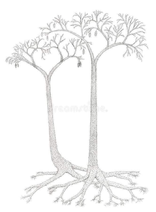 Dibujo de un extinto árbol-como las plantas Lepidodendron ilustración del vector