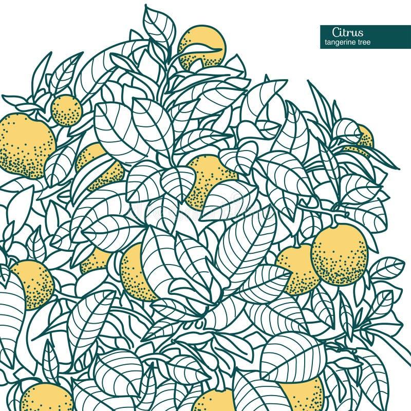 Dibujo de una pequeña mandarina de la fruta cítrica, árbol de fruta cítrica anaranjado ilustración del vector