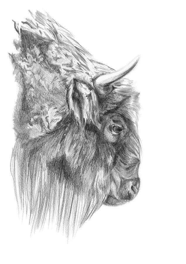 Dibujo del bisonte ilustración del vector
