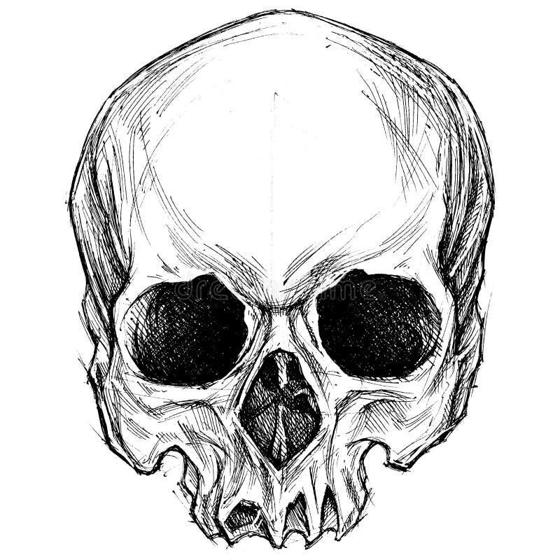 Dibujo del cráneo stock de ilustración