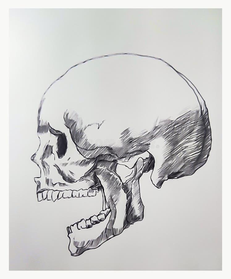 Dibujo del cr?neo en el ejemplo del papel libre illustration