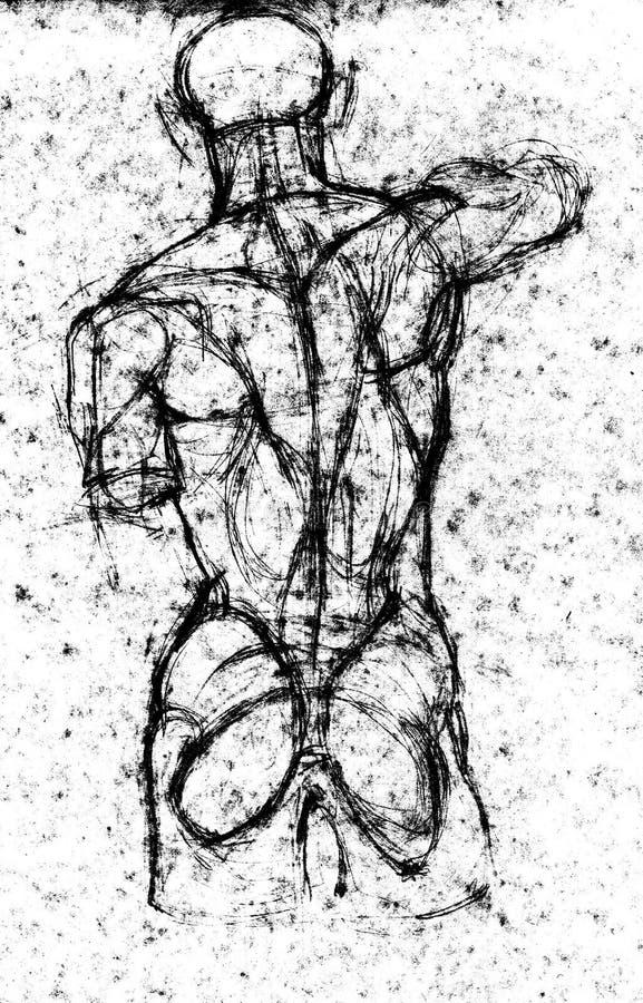 Dibujo Del Estudio Del Cuerpo De La Parte Posterior Del Ser Humano ...