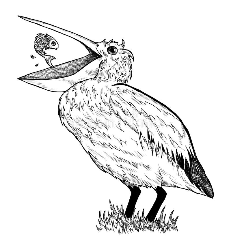 Dibujo Del Pelícano Con Los Pescados Imagen de archivo