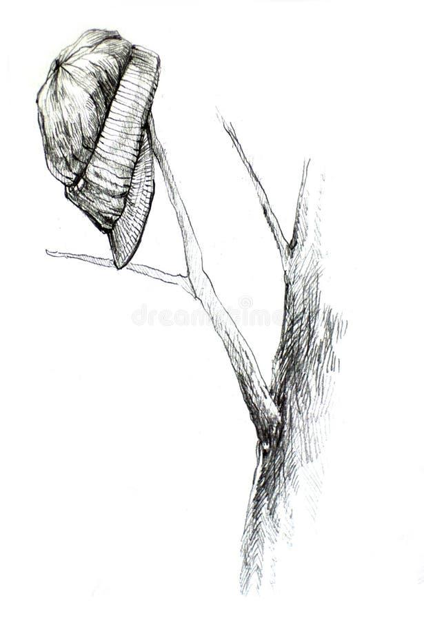Dibujo Del Sombrero En Rama De árbol Imagen de archivo - Imagen de ...
