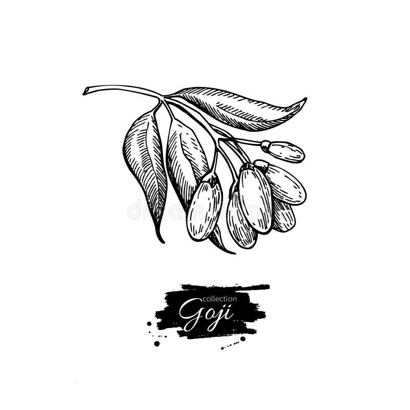Dibujo del superfood de la baya de Goji Illust dibujado mano libre illustration