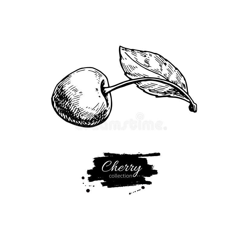 Dibujo Del Vector De La Cereza Baya Dibujada Mano Aislada Con La ...