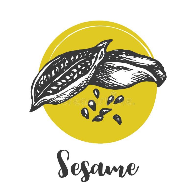 Dibujo del vector de la semilla de sésamo Dé el ingrediente alimentario exhausto Bosquejo de la colección de las hierbas y de las libre illustration