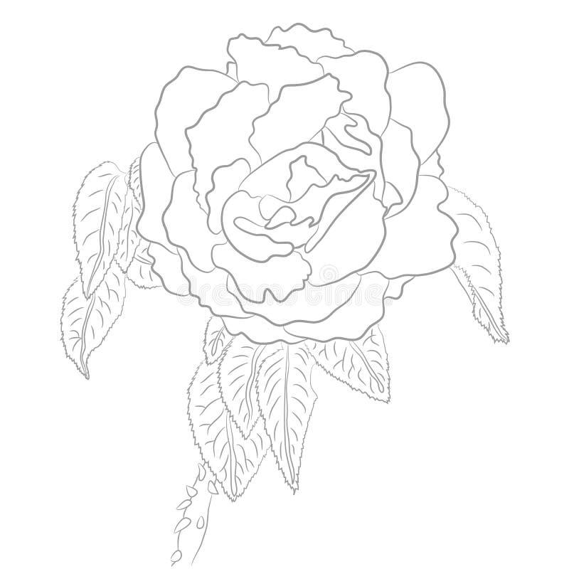 Dibujo del vector de Rose para el libro de colorear libre illustration