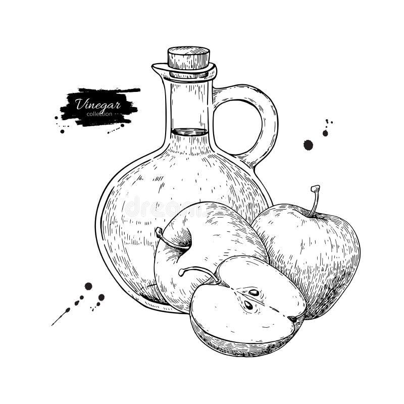Dibujo del vector del vinagre de Apple Ilustración drenada mano Vidrio BO ilustración del vector