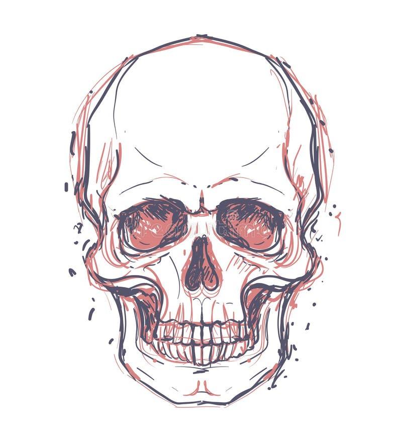 Dibujo incompleto del estilo del cráneo humano, cabeza humana, aislada en wh stock de ilustración