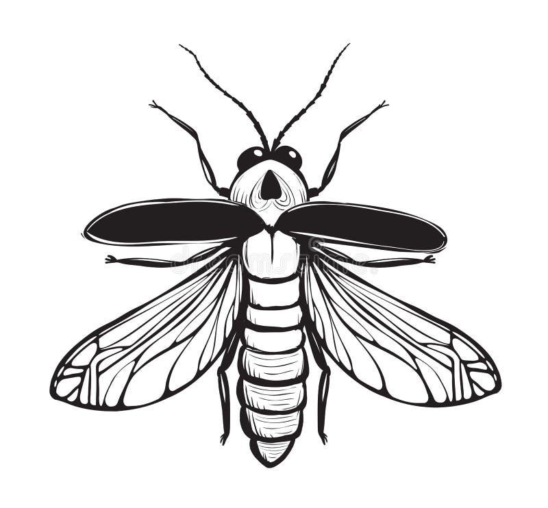 Dibujo Manchado De Tinta Del Negro Del Insecto De La Luciérnaga ...