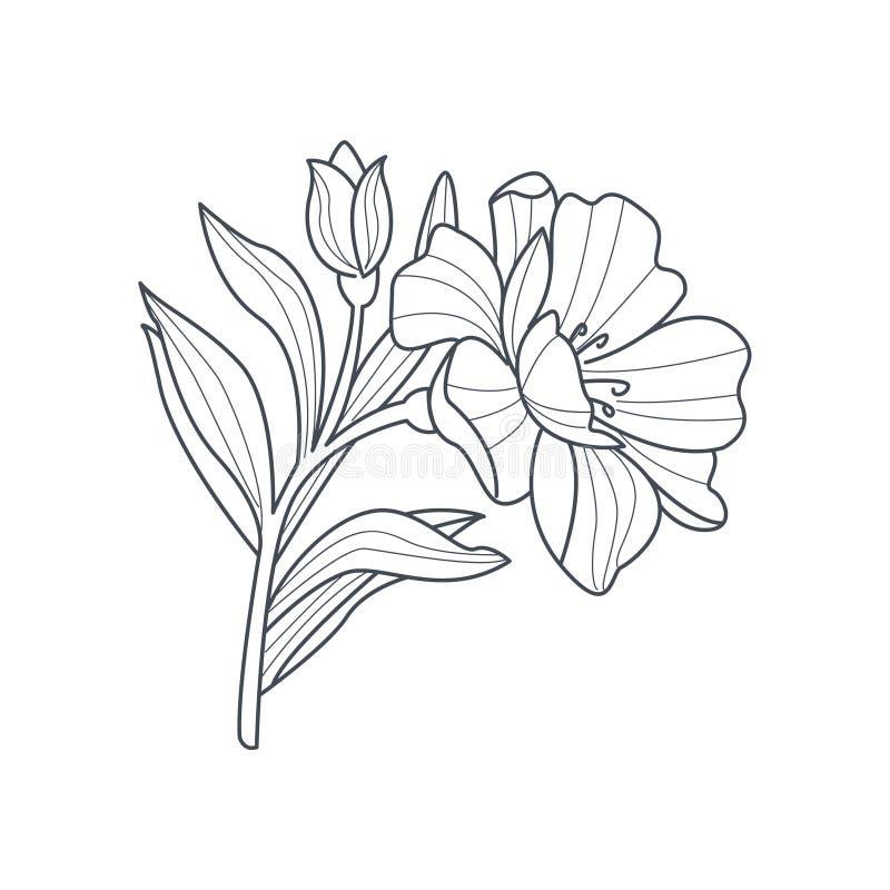 Dibujo monocromático de la flor del Calendula para el libro de colorear libre illustration