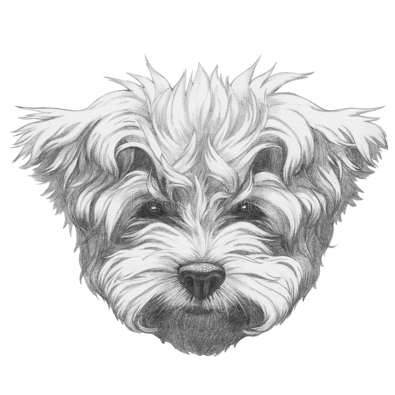Kleurplaat Bull Terrier Dibujo Original Del Caniche Malt 233 S Stock De Ilustraci 243 N