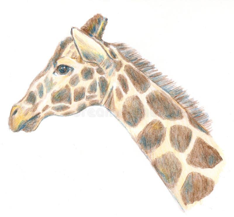 Dibujo principal del retrato de la jirafa en el ejemplo blanco del fondo fotografía de archivo