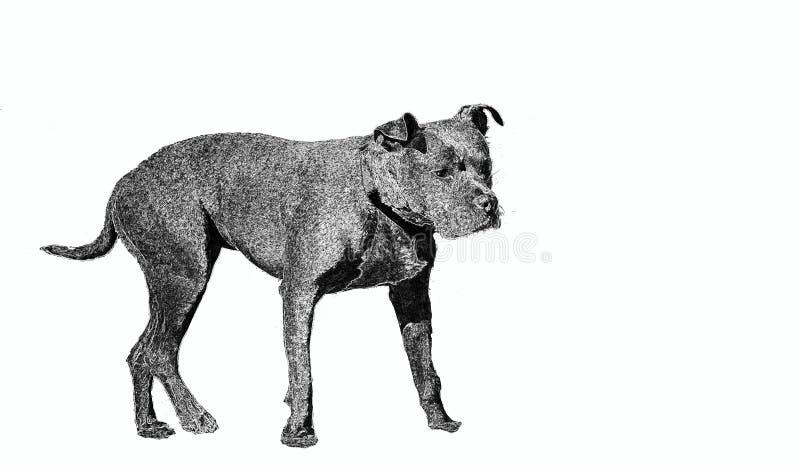 Dibujo representando un perro guardián en blanco y negro en un fondo blanco usado típicamente en las muestras 'perro-alertas 'que imagen de archivo libre de regalías