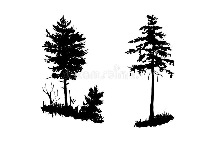 Dibujo, sistema de elementos de los aislantes, pino joven y picea joven en el bosque, ejemplo del vector del bosquejo fotos de archivo libres de regalías