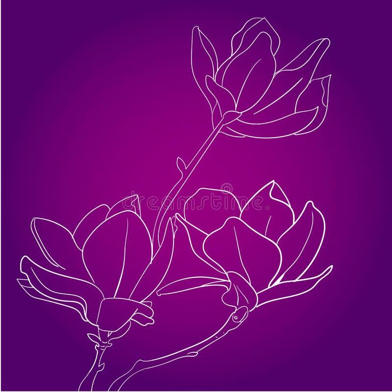Dibujo y bosquejo de la flor del vector de la magnolia con línea-arte blanco y negro stock de ilustración