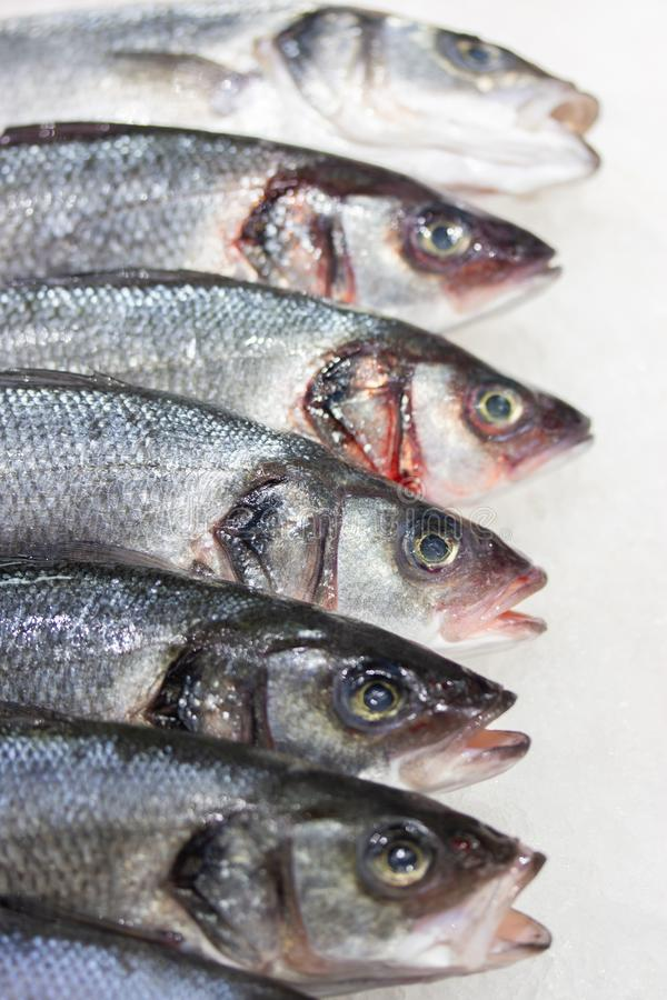 Dicentrarchus labraxis fish. Fresh fish on ice at the store counter, freshly caught fish heads, vertical food background. Dicentrarchus labraxis fish also known stock image
