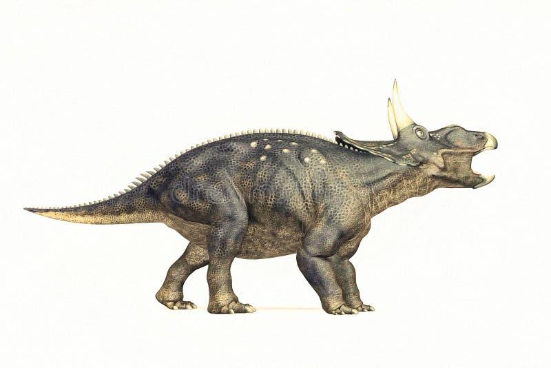 Diceraptor白色背景 库存图片