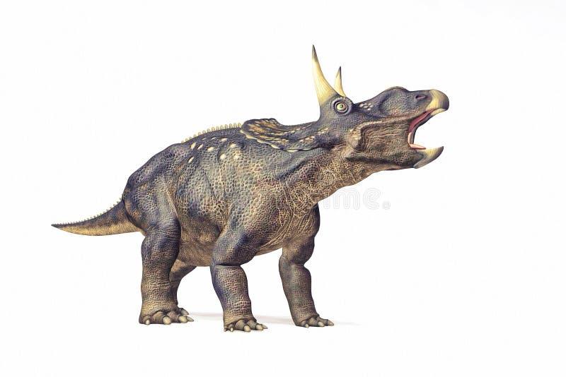 Diceraptor白色背景 库存照片