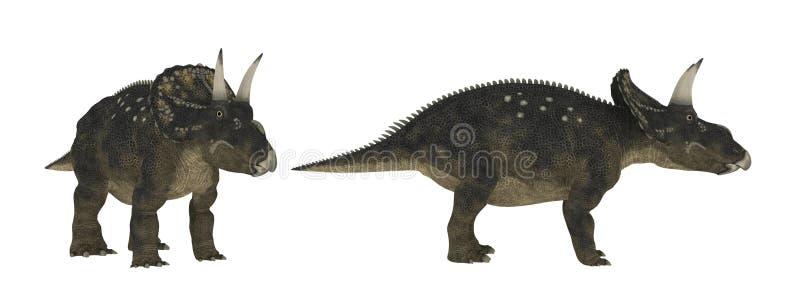 Diceratops Isolado do dinossauro no branco ilustração royalty free