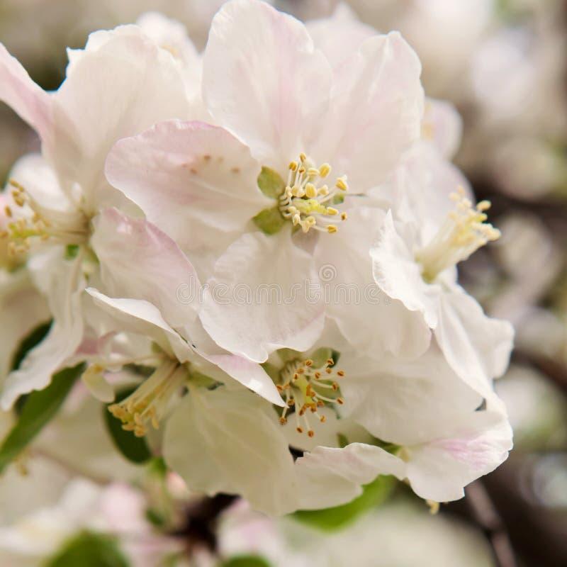 Dicha de la primavera fotos de archivo