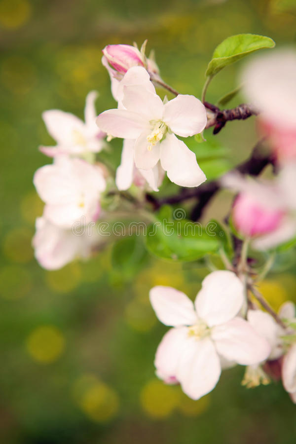 Dicha de la primavera imagen de archivo libre de regalías