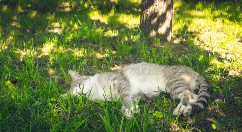 Dicha y sueño El gato perezoso duerme en el jardín imagenes de archivo