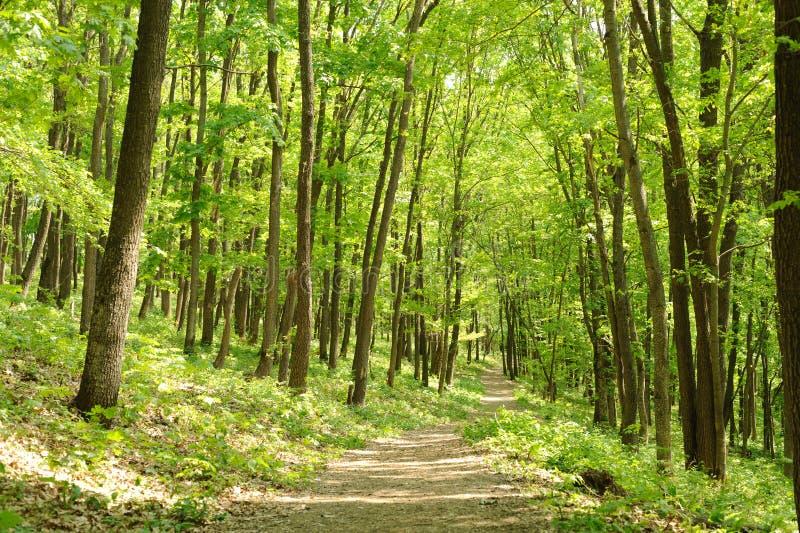 Dicht bos stock afbeeldingen
