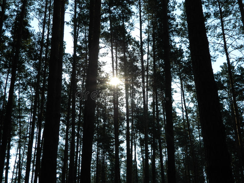 Dicht bos stock afbeelding