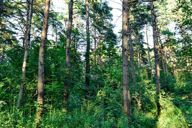 Dicht bos een ondoordringbaar struikgewas Concept energie Rusland Boom op gebied royalty-vrije stock afbeeldingen