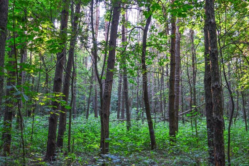 Dicht bos een ondoordringbaar struikgewas Concept energie Rusland Boom op gebied stock foto