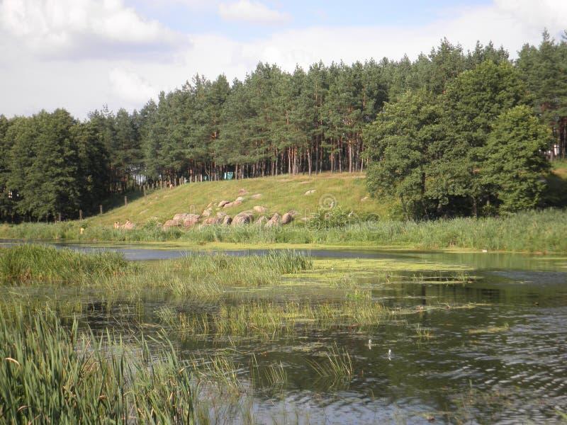 Dicht bos met een open vallei voor de rivier royalty-vrije stock afbeeldingen