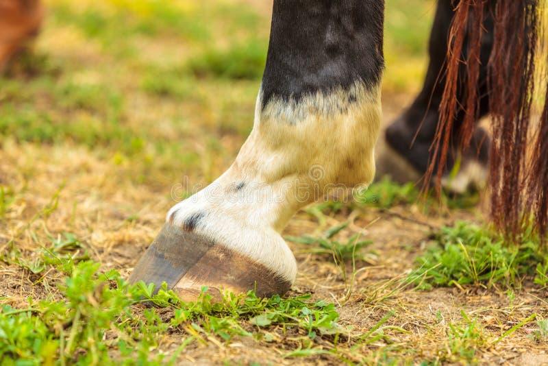 Dicht omhoog gedetailleerd van paardhoef royalty-vrije stock afbeeldingen