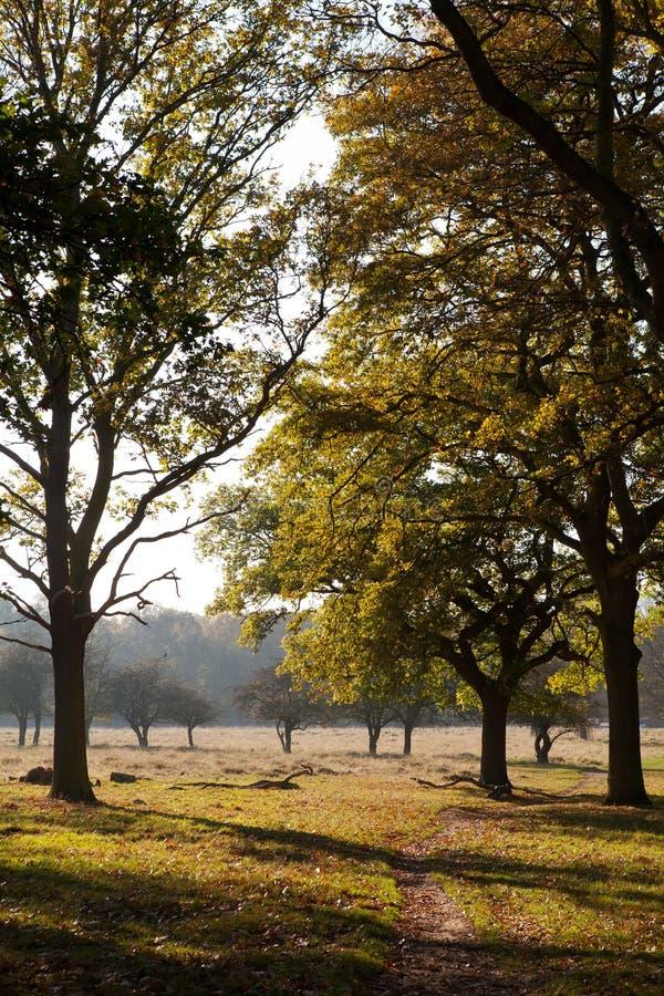 Dichtbegroeid Park, Middlesex royalty-vrije stock foto's