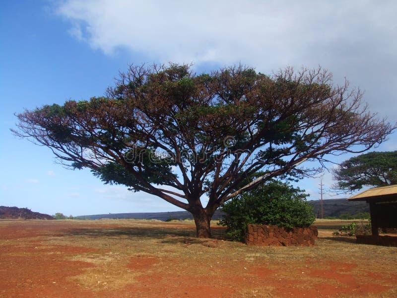 Dichtbegroeide boom bij Fort Elizabeth, Kauai, Hawaï stock afbeelding