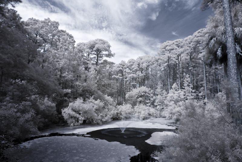 bos en water