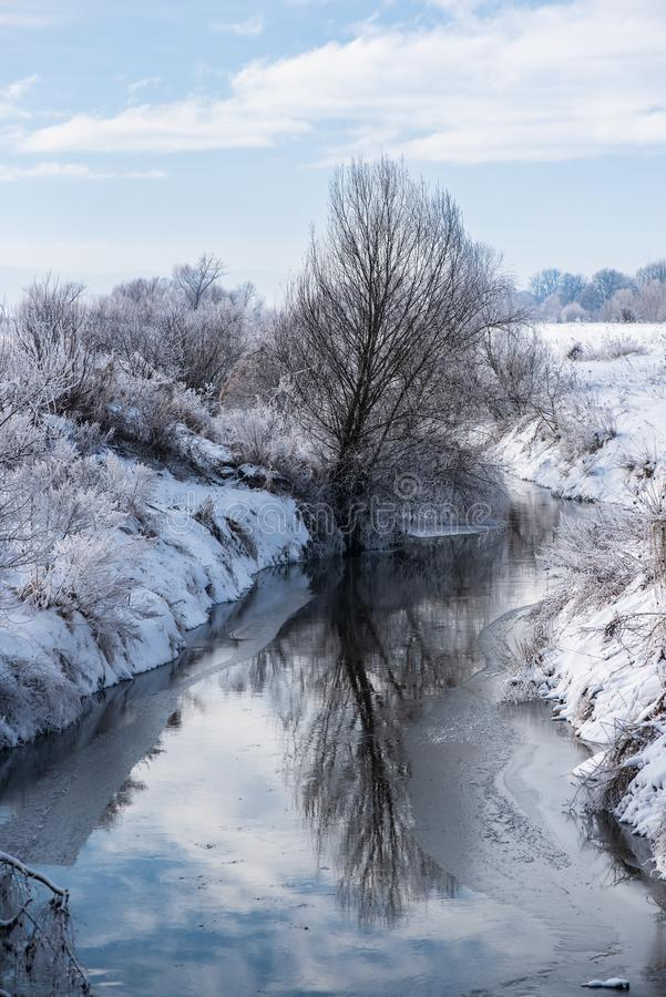 Dichtbij rivier, zijn de bomen en de aarde behandeld met sneeuw Aard in de winter stock fotografie