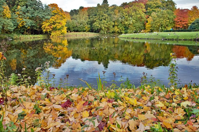 Dichtbij watermeer in het park royalty-vrije stock foto's