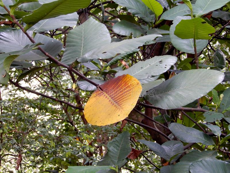 Dichte bomen in het bos royalty-vrije stock afbeeldingen