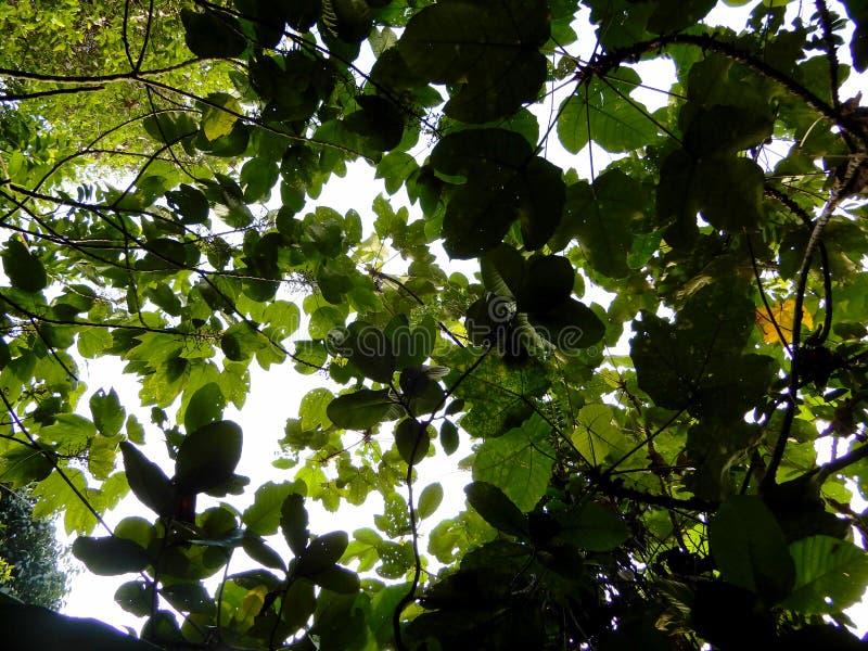 Dichte bomen in het bos royalty-vrije stock foto