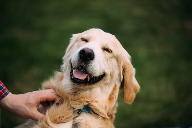 Dichte Mening van Grappige Jonge Gelukkige Labrador Glimlachende hond stock fotografie