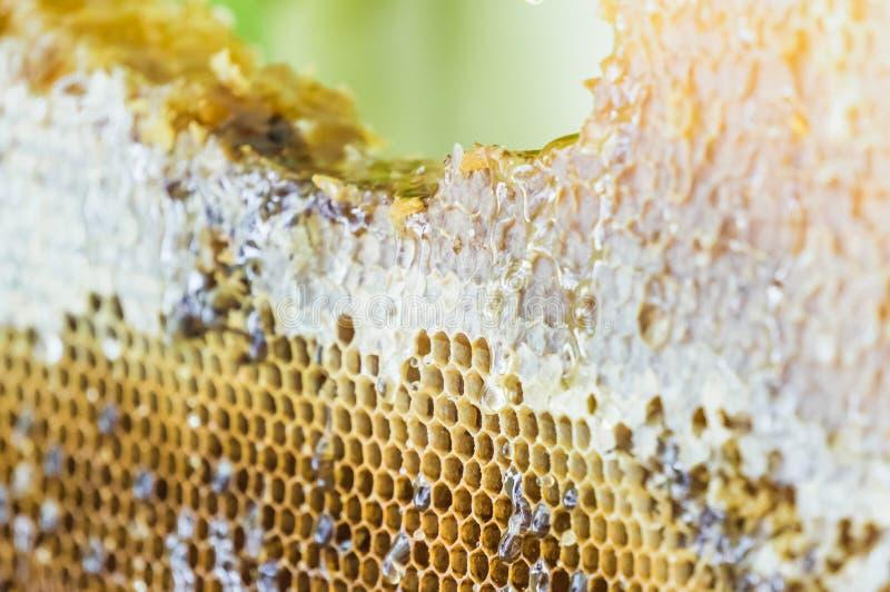 Dichte mening van honingraatblok met druipende honing stock afbeelding
