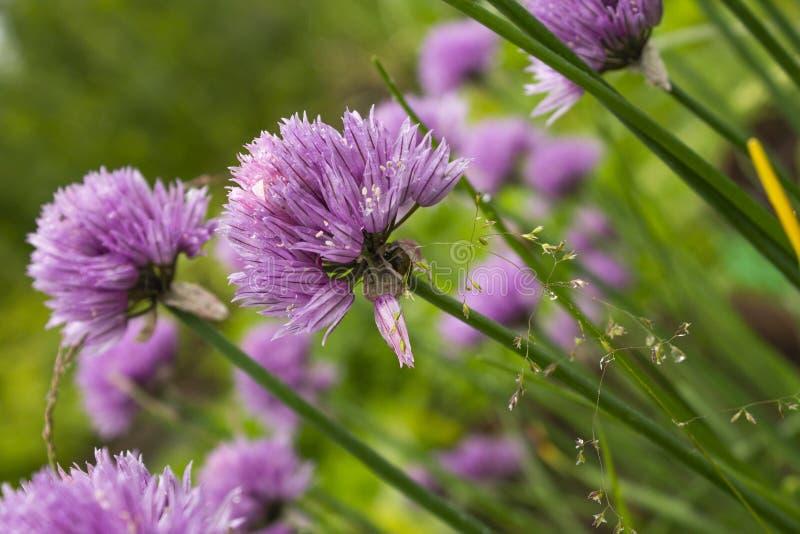 Dichte mening van wilde purpere bloemen in het bos stock afbeeldingen